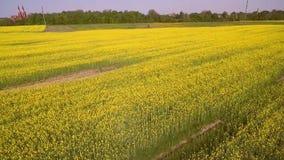 Campo di fioritura, violenza gialla archivi video