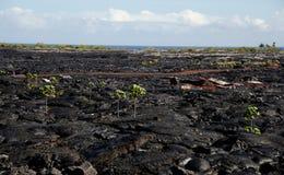 Campo di flusso della lava vicino a Kalapana Immagine Stock