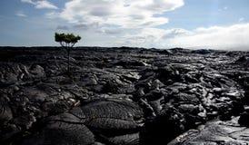 Campo di flusso della lava vicino a Kalapana Fotografie Stock