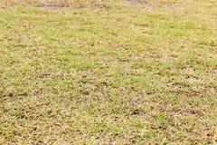 Campo di football americano di verde di erba Immagine Stock Libera da Diritti