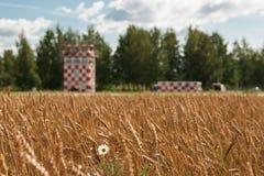 Campo di frumento Immagine Stock