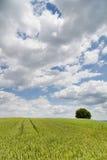 Campo di frumento in Baviera, Germania Immagine Stock Libera da Diritti