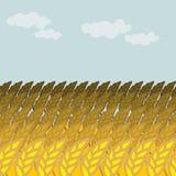 Campo di frumento Campo e cielo blu di grano Punte della segale illustrazione di stock