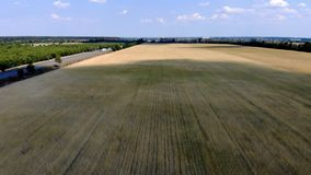 Campo di frumento da sopra stock footage