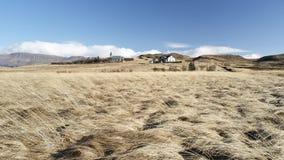Campo di frumento dell'Islanda Immagini Stock