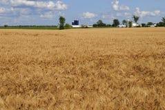 Campo di frumento di anda dell'azienda agricola Immagini Stock Libere da Diritti