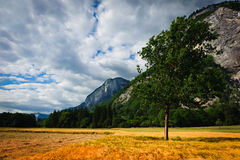 Campo di frumento dorato sotto le montagne Fotografie Stock Libere da Diritti