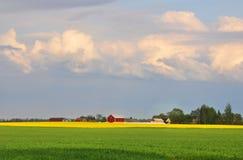 Campo di frumento e della colza immagine stock libera da diritti