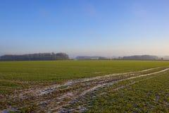 Campo di frumento e turbina di vento Immagini Stock