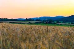 Campo di frumento nelle montagne Immagine Stock Libera da Diritti