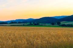 Campo di frumento nelle montagne Immagine Stock
