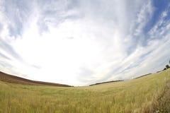 Campo di frumento, raccolta Fotografie Stock