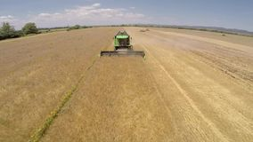 Campo di frumento Stagione del raccolto del grano archivi video