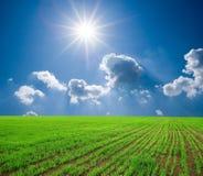 Campo di frumento verde Fotografie Stock