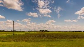 Campo di giovani piante di soia nel sole di pomeriggio Fotografia Stock