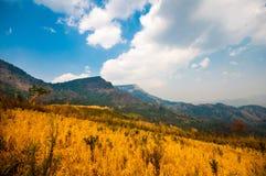 Campo di Gloden con una grande montagna. Fotografia Stock
