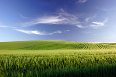 Campo di Grano Royalty Free Stock Photo