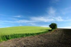 campo di grano Arkivfoto