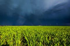 Campo di grano al sole Immagine Stock Libera da Diritti