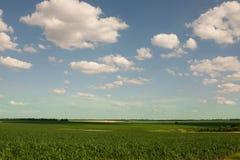 Campo di grano alla luce di primo mattino Immagini Stock Libere da Diritti