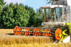 Campo di grano con grano al raccolto fotografia stock