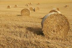 Campo di grano con i mucchi di fieno Immagini Stock Libere da Diritti