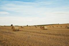 Campo di grano con i mucchi di fieno Immagine Stock Libera da Diritti