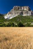 Campo di grano con il contesto montagnoso Fotografie Stock Libere da Diritti