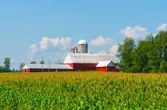 Campo di grano con il granaio Colourful Fotografia Stock Libera da Diritti