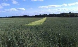 Campo di grano con la striscia luminosa Immagini Stock Libere da Diritti