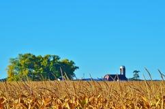 Campo di grano con un granaio e un albero. Immagini Stock Libere da Diritti