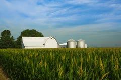 Campo di grano del Michigan e granaio bianco Fotografie Stock
