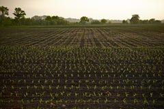 Campo di grano del terreno coltivabile Immagini Stock
