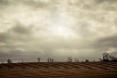 Campo di grano del velluto a coste Fotografia Stock