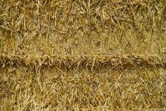 Campo di grano della paglia immagine stock