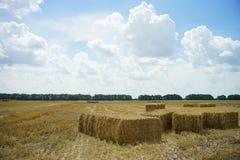 Campo di grano della paglia immagine stock libera da diritti