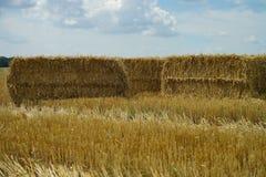 Campo di grano della paglia fotografie stock