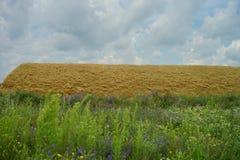 Campo di grano della paglia fotografia stock