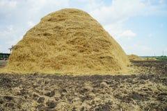 Campo di grano della paglia fotografia stock libera da diritti