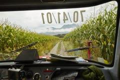 Campo di grano della strada del tergicristallo dell'automobile Fotografia Stock Libera da Diritti