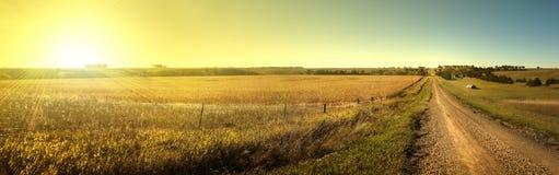 Campo di grano di alba Fotografia Stock