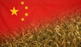 Campo di grano di concetto di nutrizione della Cina con la bandiera del tessuto Immagine Stock