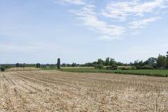 Campo di grano dopo il raccolto Immagini Stock