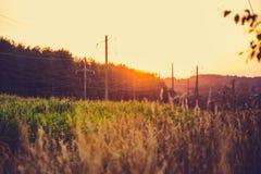 Campo di grano e del mais al tramonto Immagini Stock