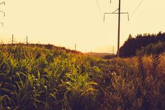 Campo di grano e del mais al tramonto Fotografie Stock
