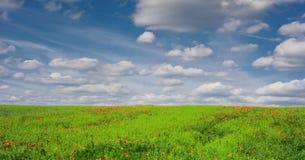 Campo di grano e del papavero con cielo blu nuvoloso, campagna ceca Fotografia Stock