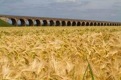 Campo di grano e del viadotto Immagine Stock