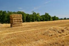 Campo di grano maturo dorato di raccolto meccanico di agricoltura della mietitrice Trattore - fieno e paglia, fondo tradizionale  Fotografie Stock Libere da Diritti