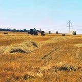 Campo di grano maturo dorato di raccolto meccanico di agricoltura della mietitrice Trattore - fieno e paglia, fondo tradizionale  Immagini Stock Libere da Diritti