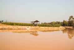 Campo di grano nel periodo di siccità, Tailandia Fotografie Stock